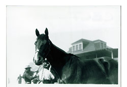 CELT became the first Claiborne stallion to lead the Sire List in 1921.