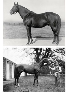 French Classic winner SIR GALLAHAD III (top) sired American Triple Crown winner GALLANT FOX in his first crop. GALLANT FOX also stood at Claiborne, his son OMAHA (bottom) won the 1935 Triple Crown.